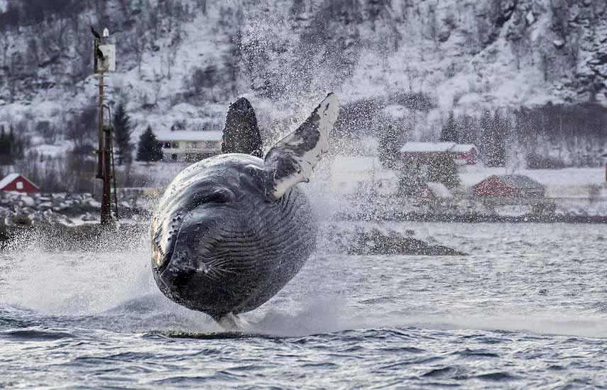 特雷姆索-特雷姆瑟丨神秘莫测的极地之门,捕鲸轮观鲸之旅