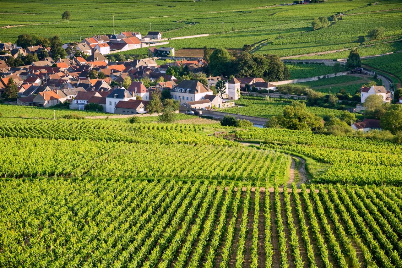 第戎(Dijon)-帕缇亚父子酒庄(Patriarche Père et Fils)-博讷(Beaune)
