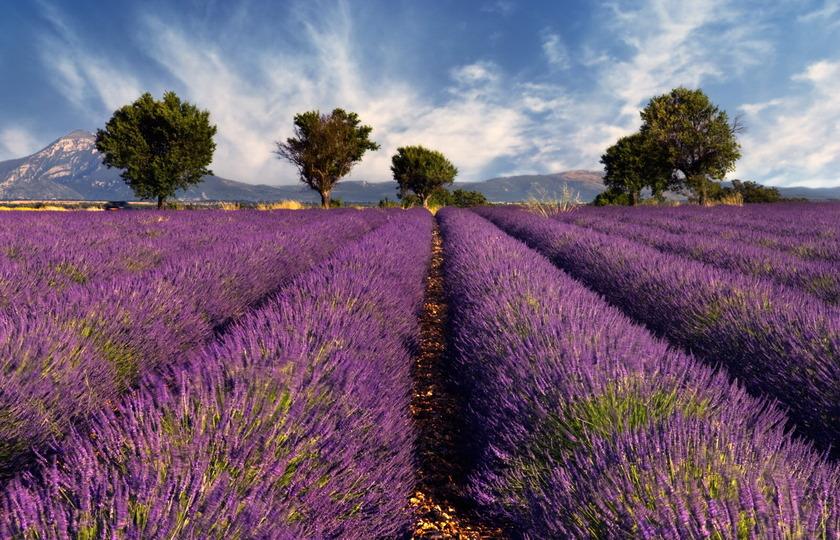 阿维尼翁(Avignon)– 索村(Sault 只看薰衣草,不进村)- 泉水小镇